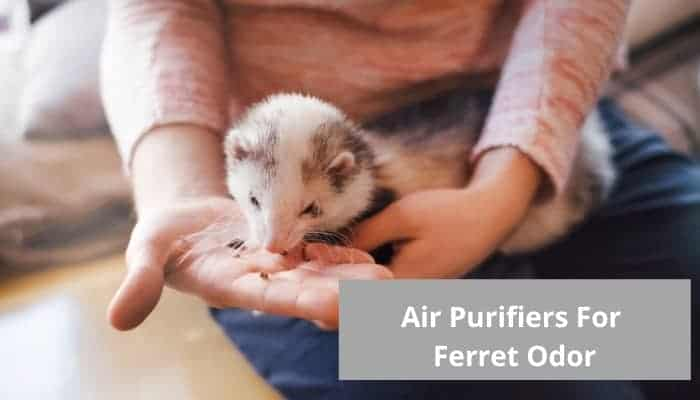 The best air purifier for ferret odor