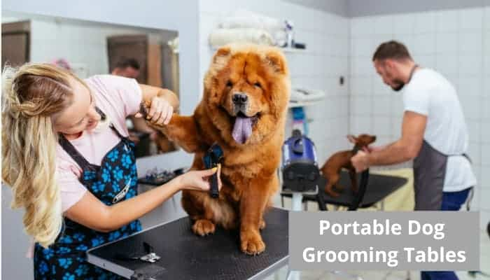 Top Rated Portable Dog Grooming Table
