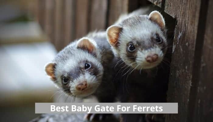 Baby gate for ferrets