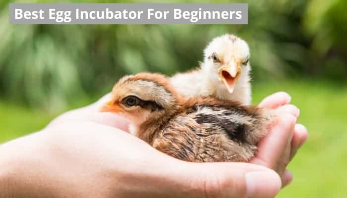 Best egg incubator for beginners