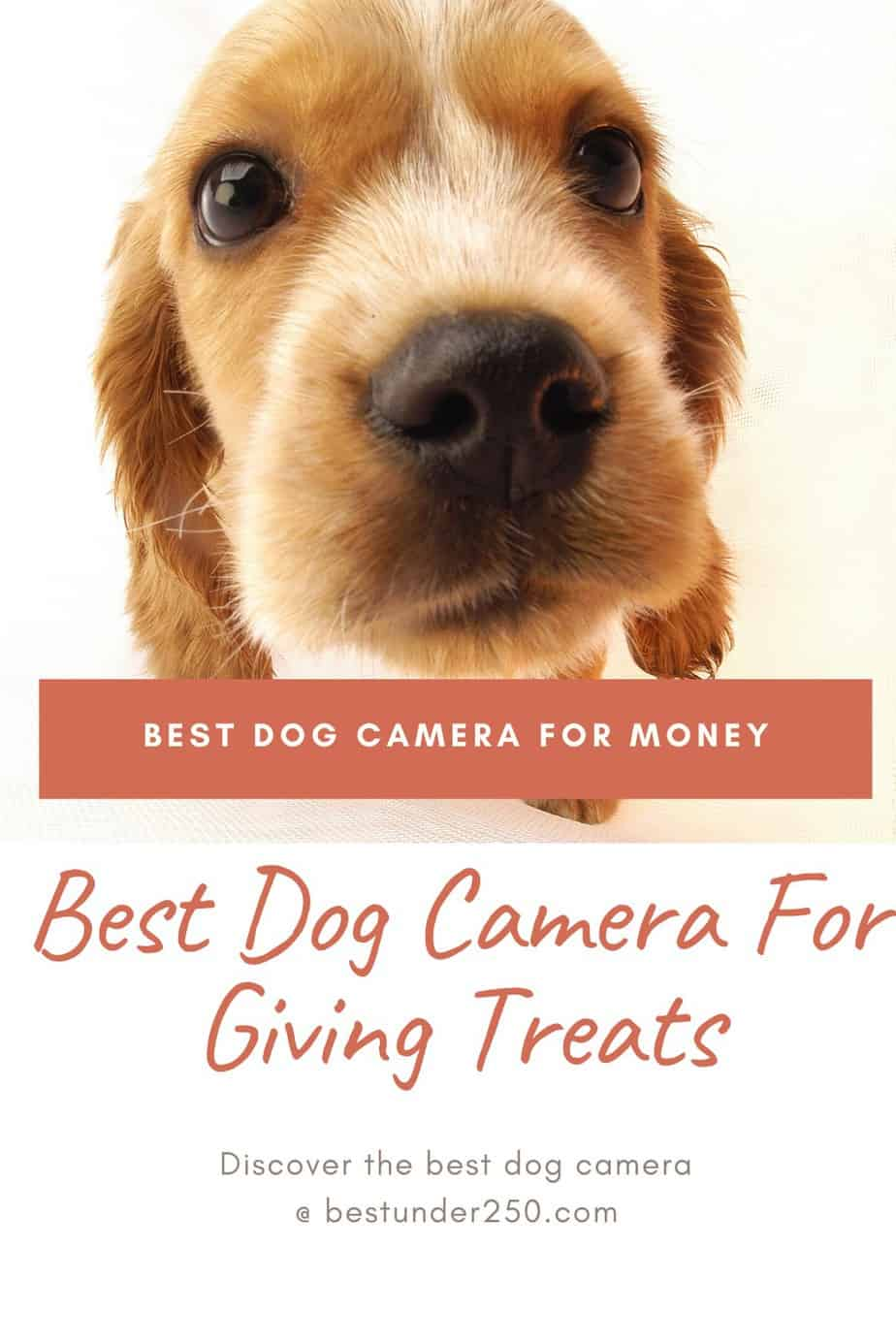 Best dog camera to watch your dog remotely