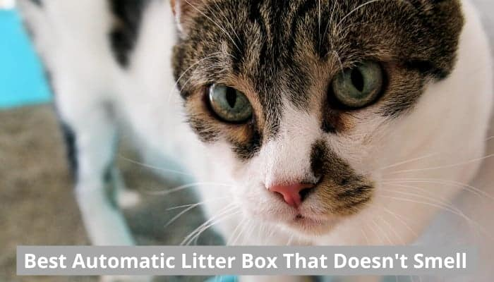 Best automatic litter boxes that don't smell