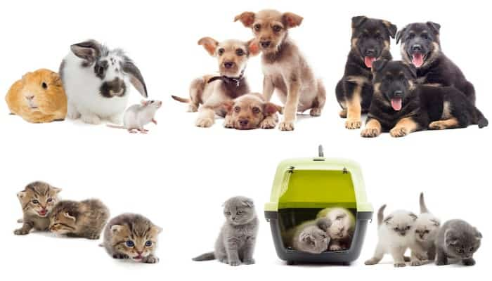 All your pet products