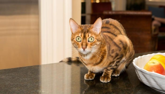 Keep your cat off your kitchen counter
